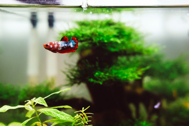An Open Letter To My Fish